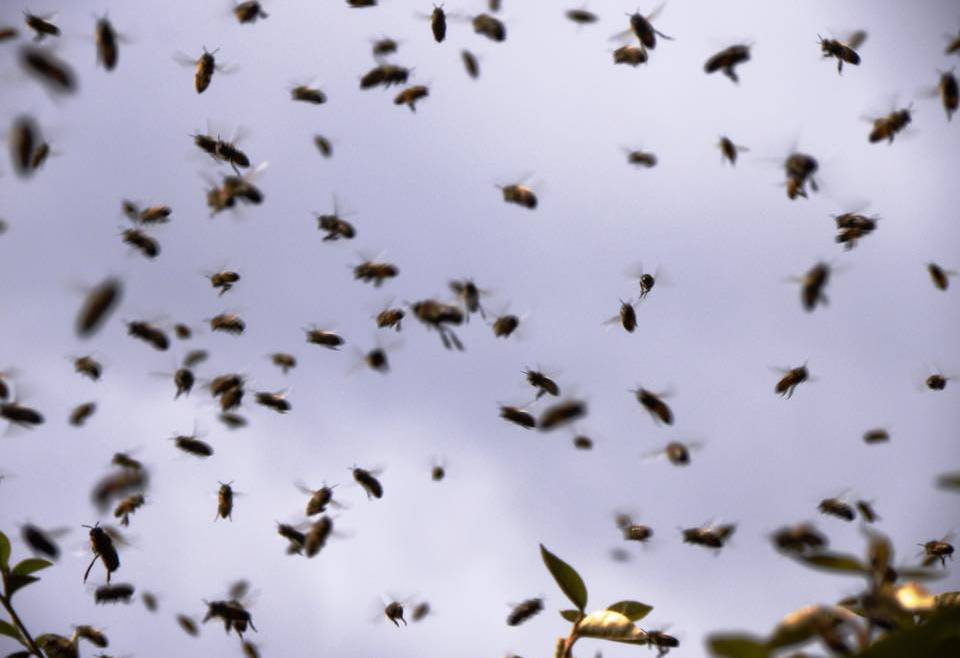 Do you have a swarm or nest?