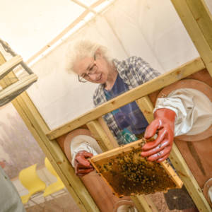 beekeping demo1