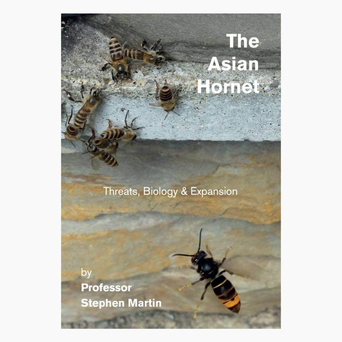 The Asian Hornet