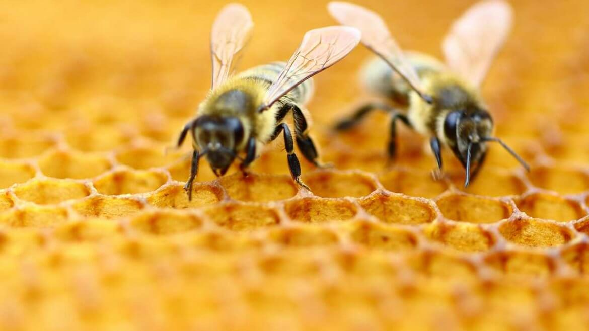 National don't step on a bee day