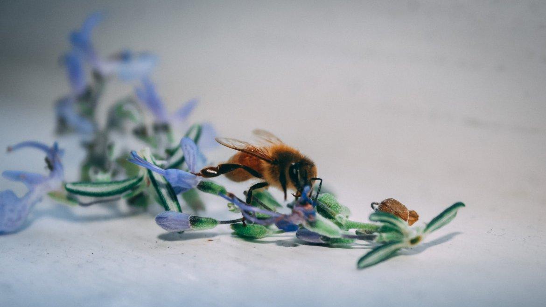 Bee Made Banquet 22nd November 2019 7:30pm